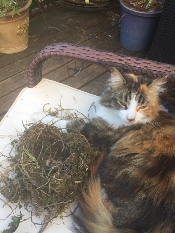 nest cat