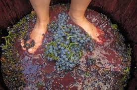 Barefoot Wine Stomping - Winelands Guide - Winelands Hotels