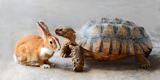Unconventional Tale of Rabbit vs Tortoise - Light Asset